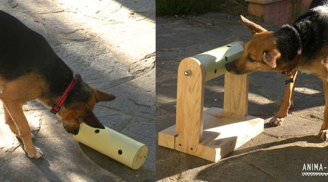 esercizi cani