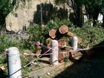 Mercoledì 13 luglio: il vento sradica gli alberi a Bergamo