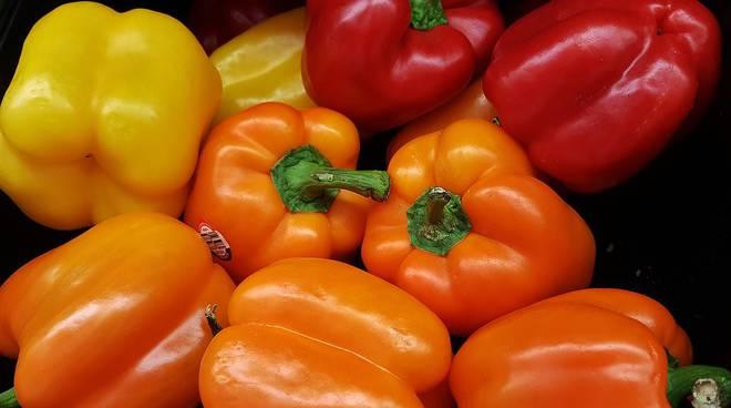 Risultati immagini per peperoni colorati