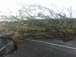 Temporale sulla Bergamasca: decine di alberi sradicati e abbattuti