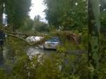 albero crollato viale giulio cesare