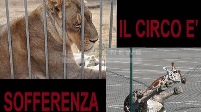 """Animalisti all'attacco, presidio contro il circo Orfei a Bergamo: """"E' sofferenza"""""""