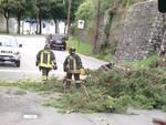 Il vento sradica un albero in Sant'Agostino