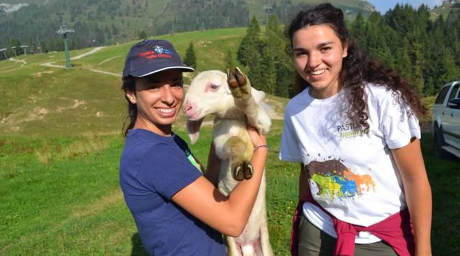 Pasturs, un'estate sulle Alpi Orobie tra pecore, lupi ed orsi: ecco com'è andata foto