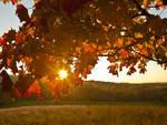 autunno sole