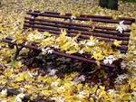 panchina autunno foglie