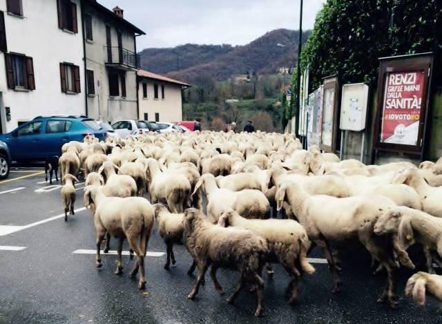 transumanza pecore