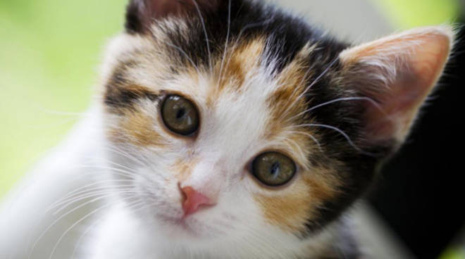Ol il tuo gatto morto condannato per stalking il - Cucina casalinga per gatti ...