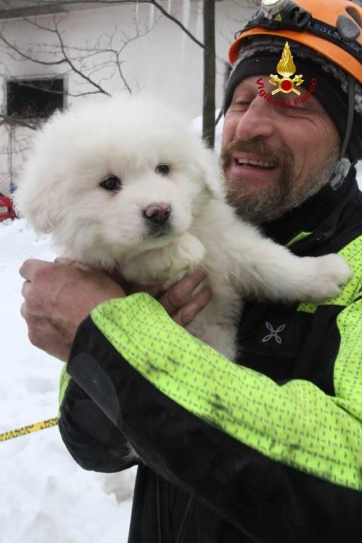 I cuccioli salvati all'Hotel RIgopiano
