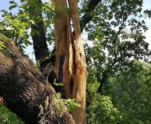 albero fulmine parco suardi