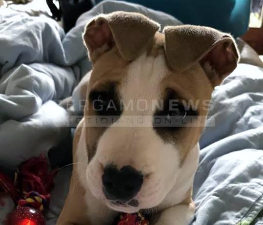 cane rubato