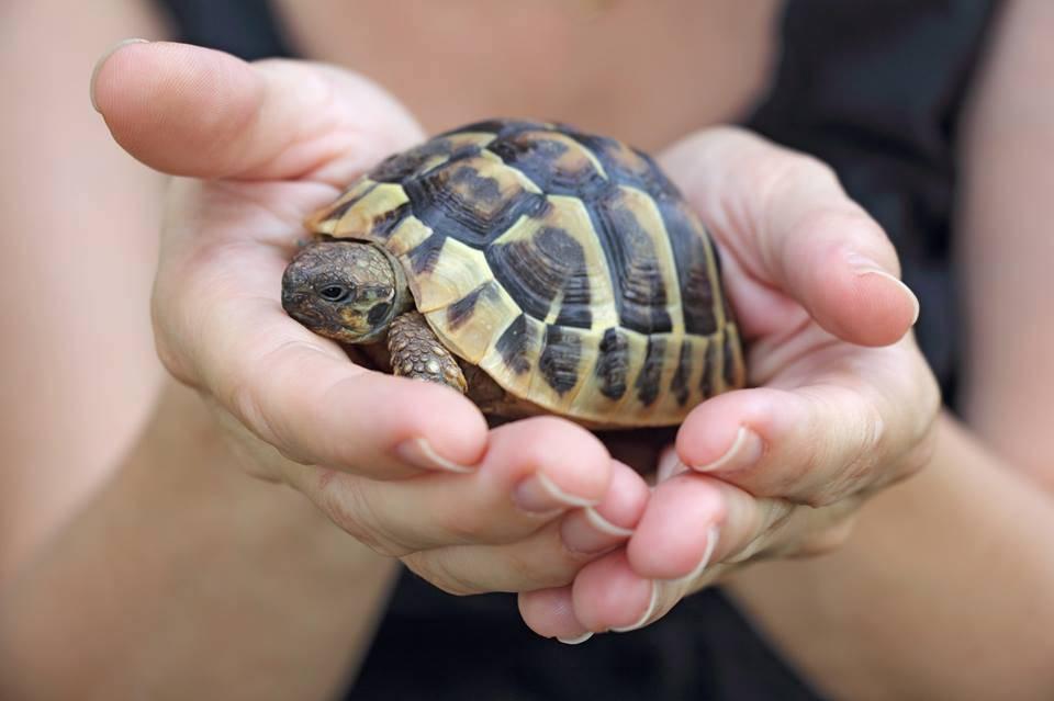 bimbo di 3 mesi prende la meningite da una tartaruga