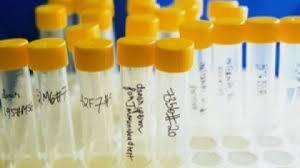 Nati con inseminazione artificiale somigliano tutti al direttore della banca del seme
