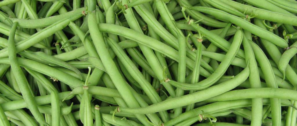 fagiolini boby