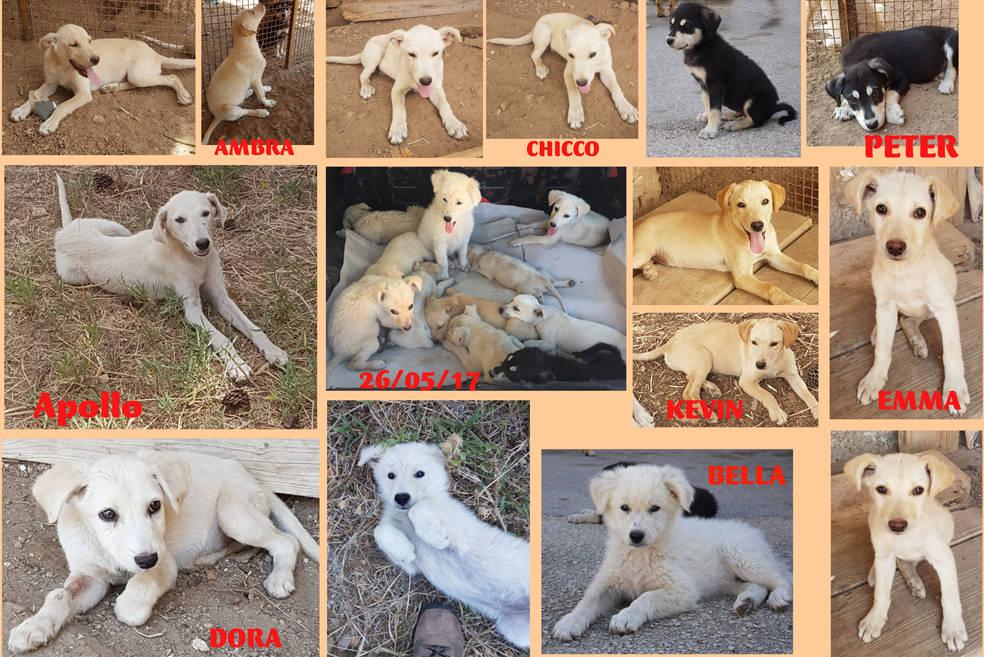 Una Ventina Di Cuccioli Salvati Dalla Strada Cercano Casa E Una Vita