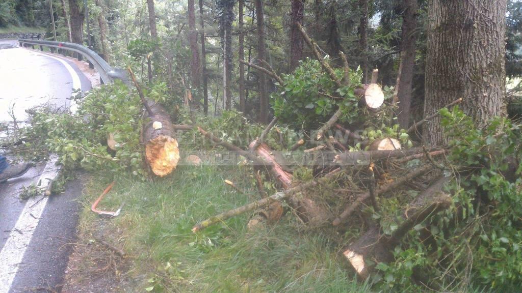 villa d'ogna albero caduto