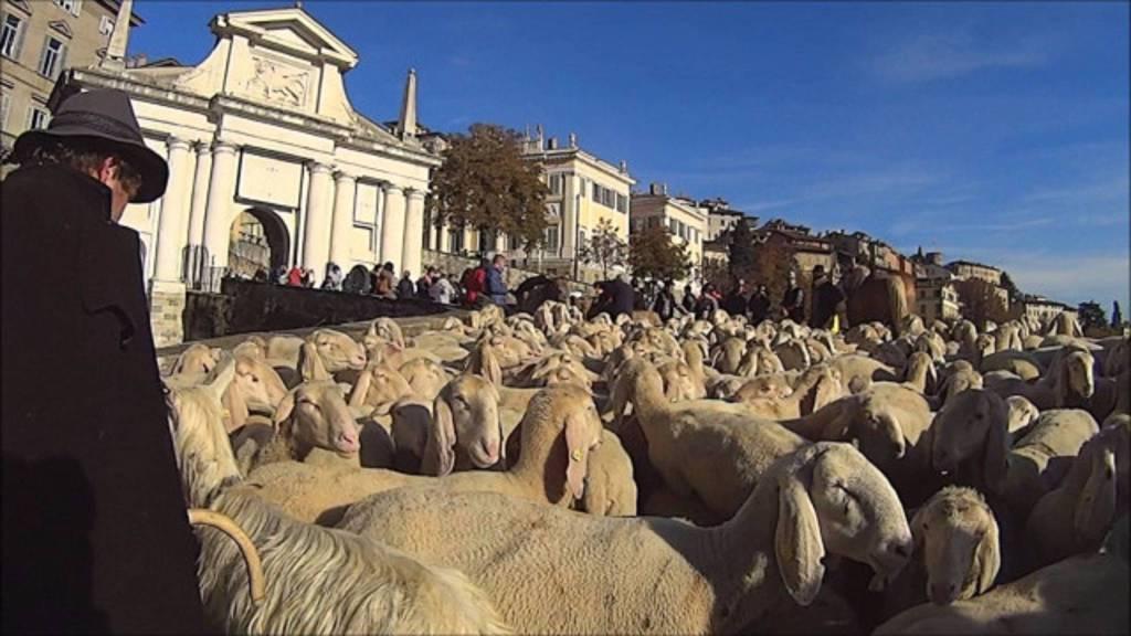 pecore in città alta