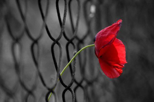 Amore carcere