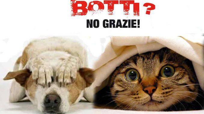 Cosa Succede A Cani E Gatti Quando Esplodono I Botti Di Capodanno