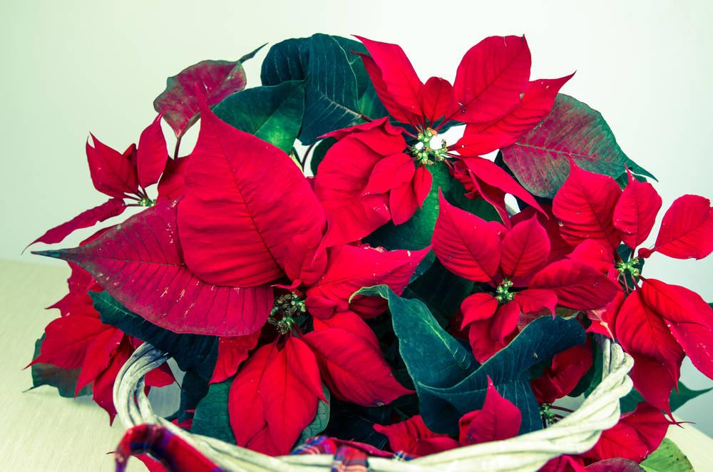 Il 12 Dicembre Negli Usa Si Regala Una Stella Di Natale Ecco Perche