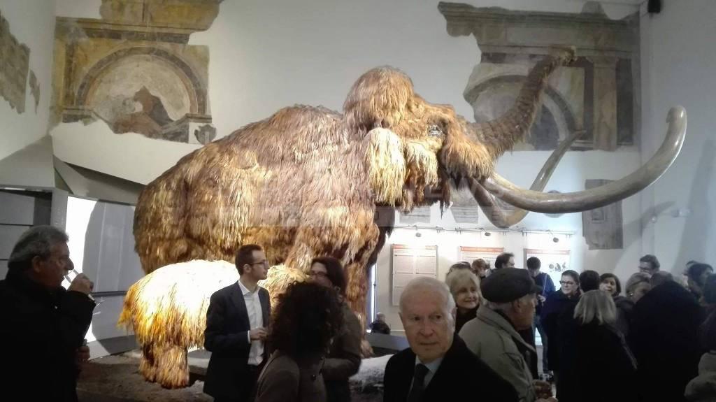 Nuovo ingresso al Museo Caffi