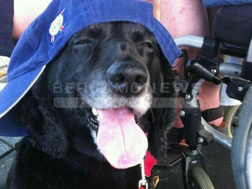 cani disabili anziani associazione bau