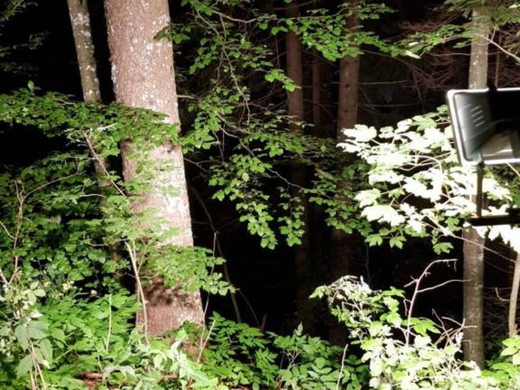 bosco oltre il colle