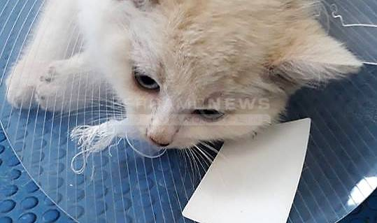 gattino sito di incontri