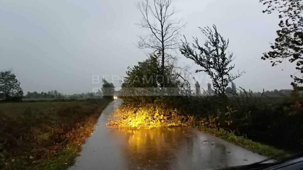 Brignano Caravaggio albero caduto