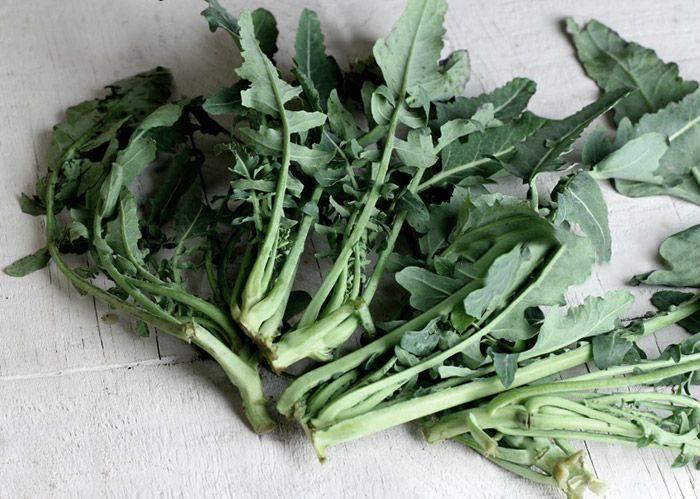 Broccolo di Creazzo
