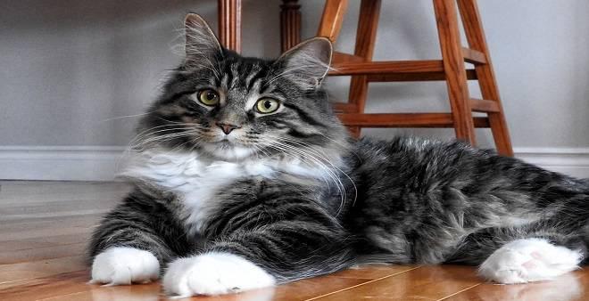 gatto pavimento