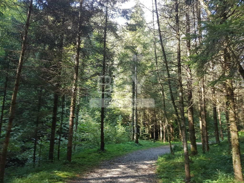 Monumento Naturale della Val Brunone