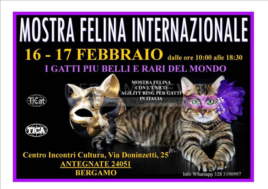 Mostra Felina Internazionale e Festa in maschera per la  Giornata Mondiale del Gatto
