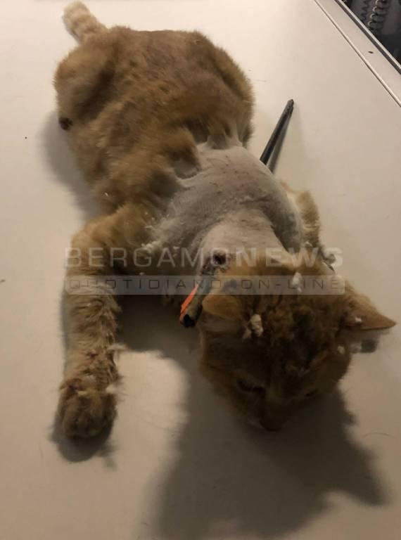 gatto trafitto dalla freccia di una balestra