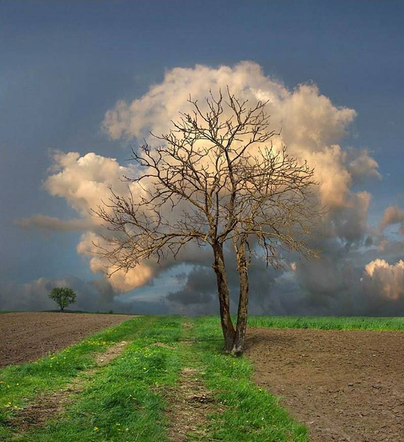 nuvole albero