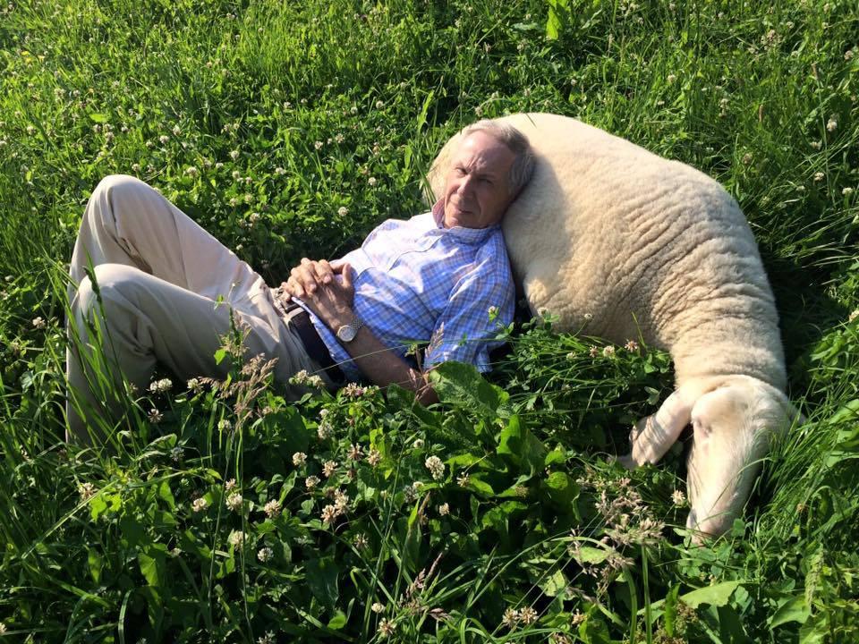 bozzetto e la strage di agnelli