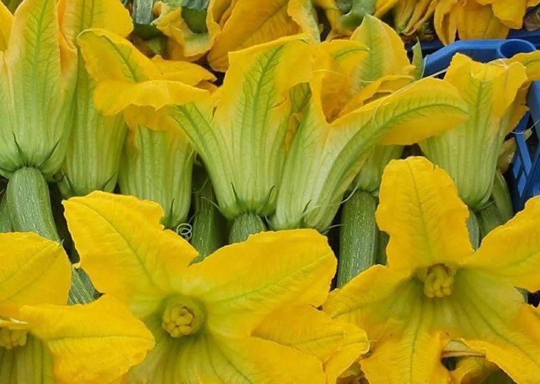 fiori di zucchina