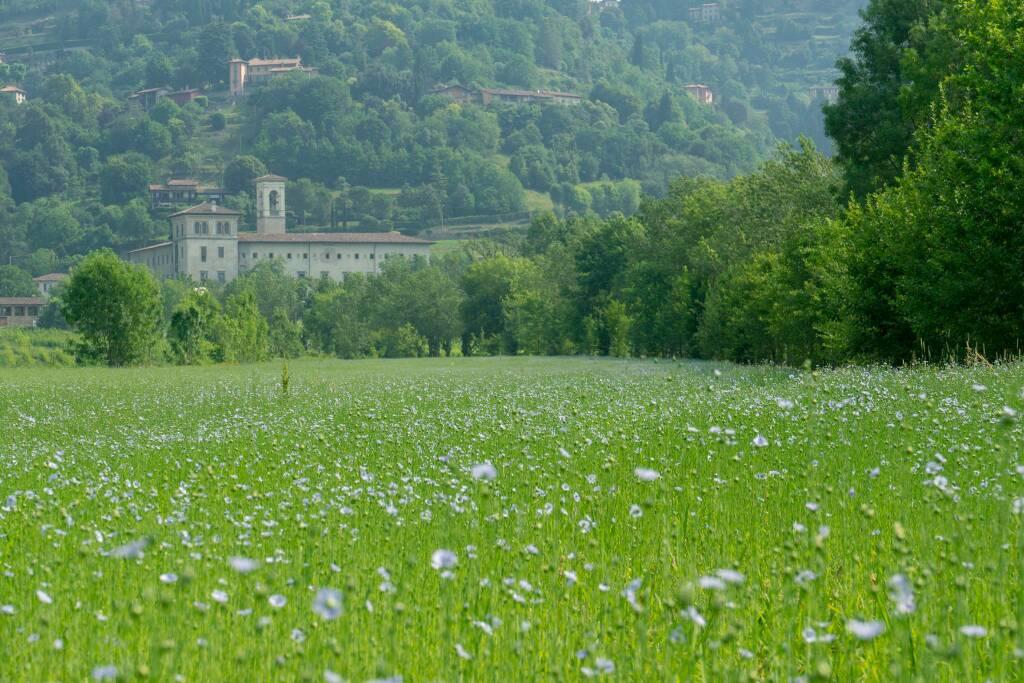 Il campo di Lino ad Astino