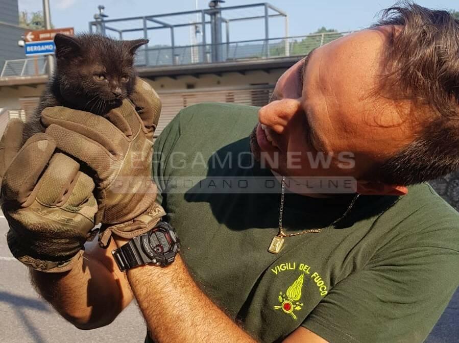 gattino salvato dai Vigili del fuoco