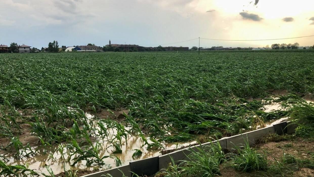 Agricoltura danneggiata