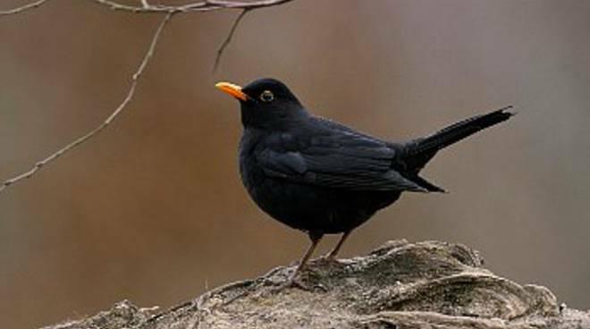 fiera degli uccelli