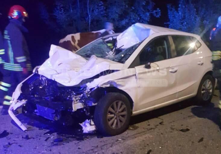Auto contro gregge muoiono 5 mucche