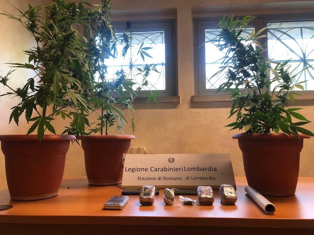piante di marijuana e hashish