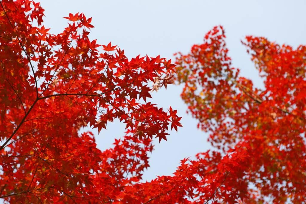 autunno ok Daniel Kim Unsplash