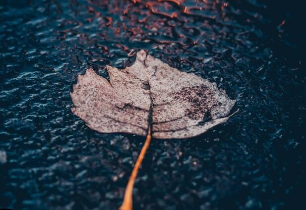 pioggia autunno ok unsplash  John Noonan