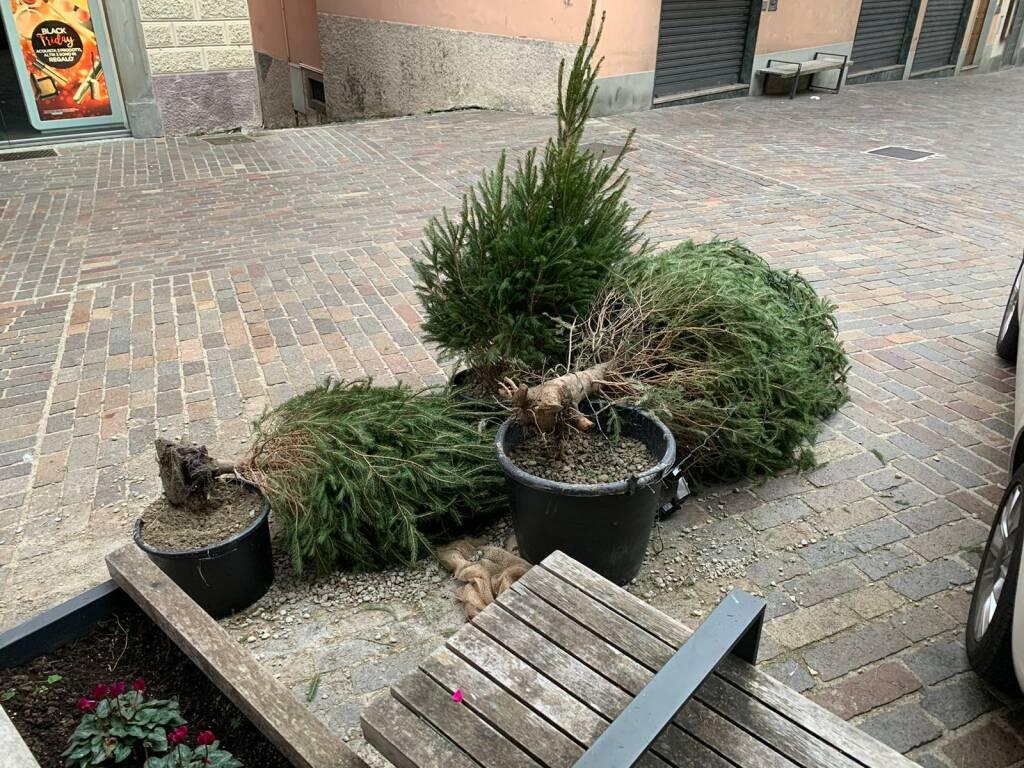 Alberi di Natale danneggiati a Clusone