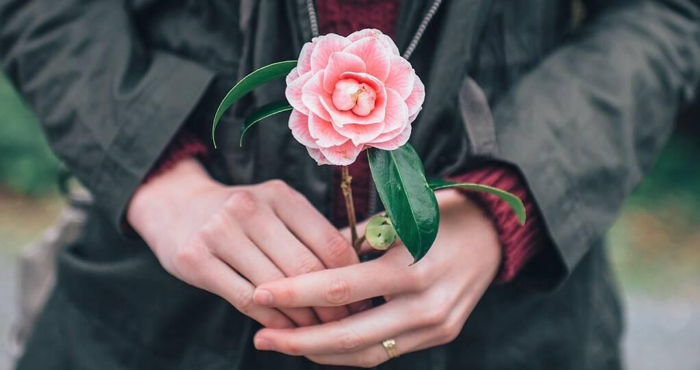 Bollino rosa