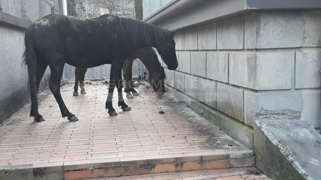 Cavalli in fuga a Gandino