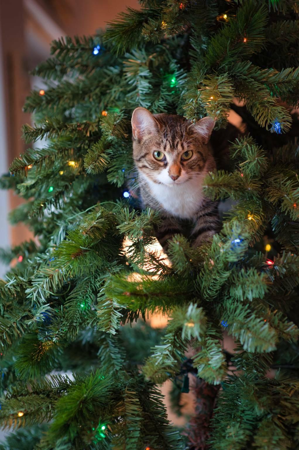 gattino  natale (foto Jessica Lewis da Unsplash)