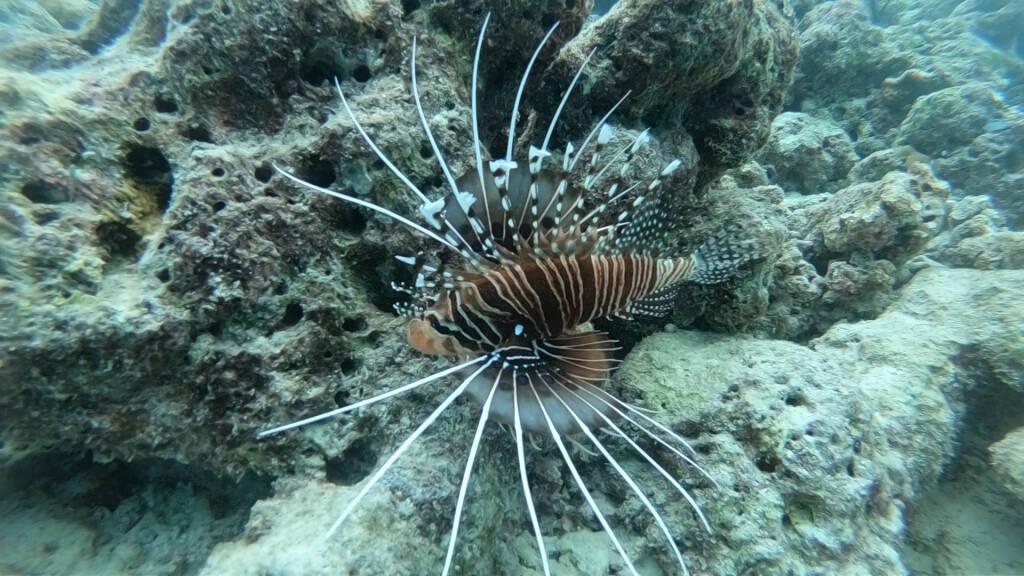 Maldive Guirri Tour